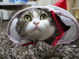 世界で一番有名なネコ、まるちゃんの詰め合わせ 第3弾