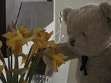 ちょっぴり短気だけど哀愁たっぷりで憎めないテディベアが主人公の物語「Misery Bear(ミザリーベア)」/休日編