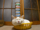 頭の上にモンプチを乗せられても微動だにしないブサカワな猫