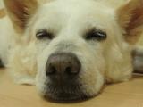 むっちゃんの幸せ 福島の被災犬がたどった数奇な運命