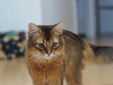 「SONY α NEX-5R」に神レンズ「SONY E 50mm F1.8 OSS SEL50F18」を付けてペットの猫を撮影/動画撮影時のオートフォーカスの食いつきが良く分かります
