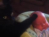 肉球のソフトタッチでぐずる赤ちゃんを泣き止ませてドヤ顔するネコ
