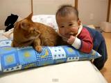赤ちゃんにシッポをかじられても「ニャンっ!」と鳴くだけで、決して怒ったりしない猫