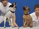 編集なし?でコレは凄すぎ!4人の人間と12匹の犬と1頭のヤギが完璧にシンクロするビデオクリップ