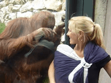 動物園のオランウータンが人間の赤ちゃんに興味津々/「あらぁ~、可愛い赤ちゃんねぇ~、ちょっと見せて~」