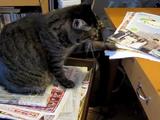 紙をパフパフするのが大好きな猫のビビアちゃん