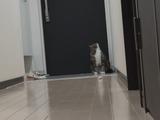 一度よそ見をしてフェイントを入れてから獲物に突進する猫のまるちゃん