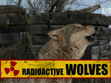 プルトニウムやセシウム、ストロンチウムで覆われた大地に生きるオオカミたちの生態系に迫るドキュメンタリー作品「チェルノブイリのオオカミたち」