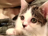 結膜炎で両眼の潰れた子ネコを保護して無事に回復させて里親の元に届けるまでの記録ムービーが素敵すぎてなんかもうめっちゃ泣いた