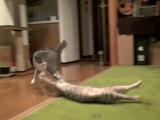 クリエちゃんの必殺技「ローリング・ズサー」をギリギリでかわすも、動揺を隠せない猫のモアレちゃん