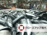 """NHK・クローズアップ現代「サンマ争奪戦」/いま、どこの国にも属さない""""公海""""で中国や台湾などの大型漁船が日本近海に来る前のサンマを""""先獲り""""している。"""