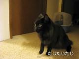 初対面のお友達にシャーシャー言われて放心状態になる猫のしおちゃん