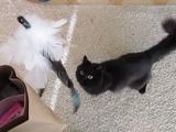 お気に入りのオモチャ「釣り竿」を新調してもらってご機嫌な猫のしおちゃん