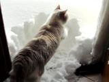 雪かきなら任せろニャ! な、頼もしいニャンコ