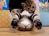 子猫が「んばぁ~」って感じでブリッジしながら寝てる(笑)