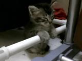 パイプにつかまりながら睡魔と戦う子猫の可愛さが異常