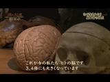 NHKスペシャル 病の起源 第2集「脳卒中 ~早すぎた進化の代償~」/人類は驚くほど脳卒中を起こすよう進化した