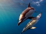 ダイバー憧れの世界!イルカ・クジラ・海ガメが手の届く距離にいる幸せを、超高画質で堪能できる映像