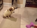 9秒で笑顔になれる動画/キャッチを練習中の子犬