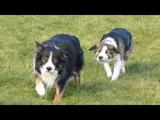 暇をもて余した犬たちの遊び