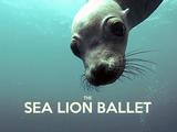 あらやだ素敵♪ 野生のアシカと一緒に泳げるダイビングスポット「米カリフォルニア州・アナカパ島」