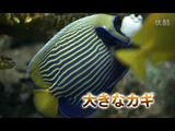 "NHK・サイエンスZERO <シリーズ細胞の世界> 第1回 「体をつくる不思議な""波""」"