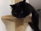 キャットタワーを買ってもらって、最初は興味なさそうにしてたのに、いざ登ってみたらタワーの最上階を取り合ってケンカする猫のしおちゃんと猫のティーちゃん