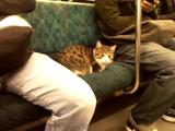 なにくわぬ顔で電車に乗るネコ