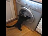 ドラム式洗濯機を見ていると我慢できなくなるネコ