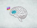 人間の脳は構造も機能も1人1人異なるため、「標準」から外れた脳をひとくくりにして、病気であるとか「欠陥がある」としてはならない/ケリ・サンドマン=ハーリー