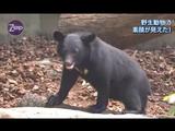 NHKサイエンスZERO「野生動物の素顔が見えた! ~驚きのバイオロギング~」