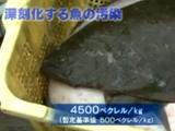NHKスペシャル「知られざる放射能汚染 ~海からの緊急報告~ 」