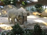 普段はゆっくり動くゾウさんたちも赤ちゃんゾウの悲鳴を聞くと光の速さで助けにくる