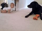 ハイハイする赤ちゃんとそれを優しく見守る犬/結末がホッコリしすぎて心が溶けた