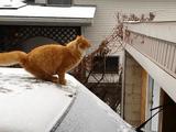 この距離が飛べニャイだと?雪が積もった車からのジャンプに失敗する猫