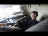 飼い主さんがソファで横になってビデオゲームをしようとすると必ずモフを要求してくる猫がいる風景
