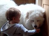 人間の赤ちゃんと犬猫の相性は抜群