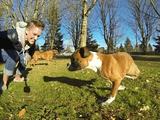 両足を切断したボクサーの子犬が、残った2本の両腕だけで元気に走り回るショートムービーがとっても素敵