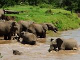 赤ちゃん象が流された!川を渡っていた象の群れによるドキドキの救出劇