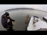 ツルツルに凍った湖の真ん中で動けなくなっていた野生の鹿をホバークラフトで救出するGoPro映像
