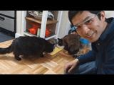 しゃべる猫「しおちゃん」を Google Glass(グーグルグラス)で撮影してみた!