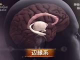 死ぬとき心はどうなるのか? そもそも「意識(魂)」と呼ばれているものの正体とは何なのか?/NHKスペシャル