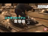 食卓の魚高騰! 海の資源をどう守る/NHK・クローズアップ現代