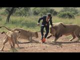 ライオンから信頼されまくっている男性、ケビン・リチャードソン(Kevin Richardson)さんが、今度はスーツを着てライオンとサッカーをしたようです