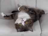 ソファと猫の相性はバツグンです