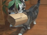 ダンボールの筒をかぶってパトロールする猫のまるちゃん