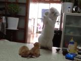 モゾモゾ動く子猫に攻撃本能を刺激され「ネコパンチしたい衝動」と「倫理観」のはざまで葛藤する猫
