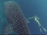 ビキニ美女とジンベエザメ! それを「GoPro」で撮影!