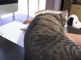 パソコンおじゃま猫 vs 無駄な抵抗を続ける飼い主さん