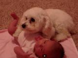 自分が一番こわいもの=「ドライヤー」から赤ちゃんを守ろうとする犬